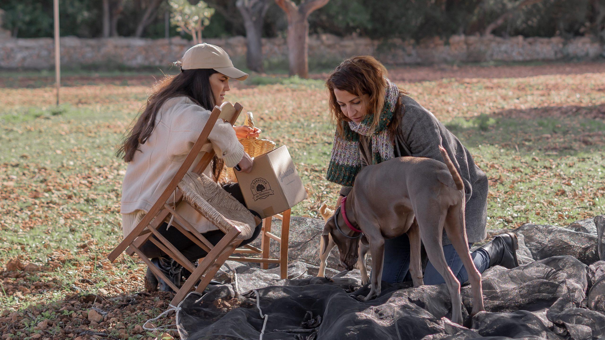 la doctora fango y la creadora de es garrover de Mallorca, recogiendo algarrobas en el campo mallorquín.